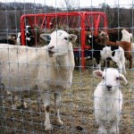 Cheap livestock fencing